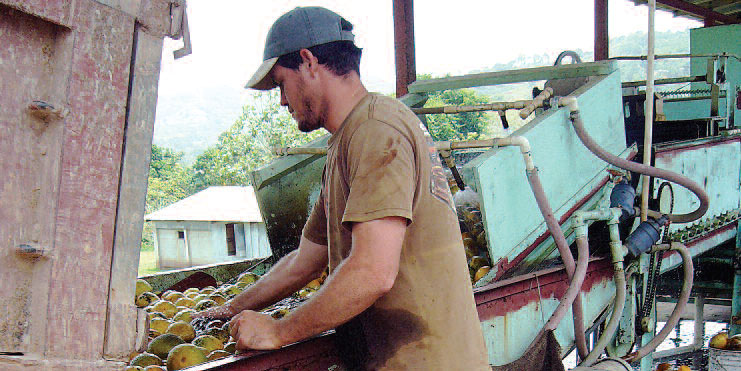 farmworker loading food onto conveyor belt
