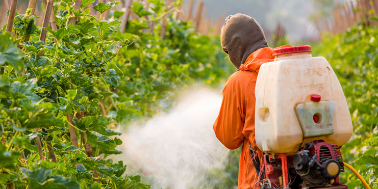 man spraying pesticides on plants