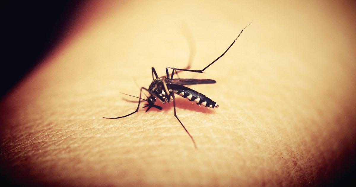 mosquito-season-zika-dengue-chikungunya