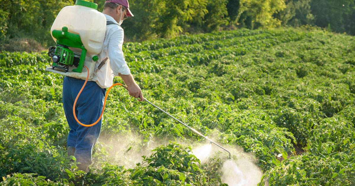 man spraying pesticides on plants