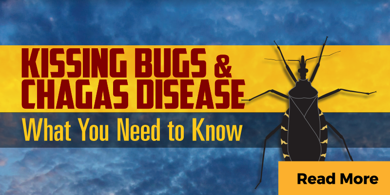 Warning about kissing bugs