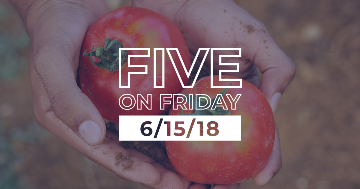 MCN Five on Friday Man holding tomatoes