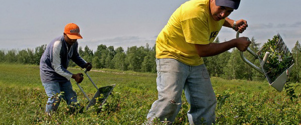 Farmworker and Essential Worker FAQ