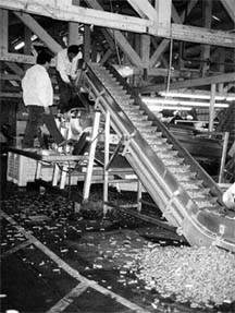 Men working in packing plant