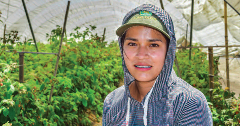farmworker in greenhouse