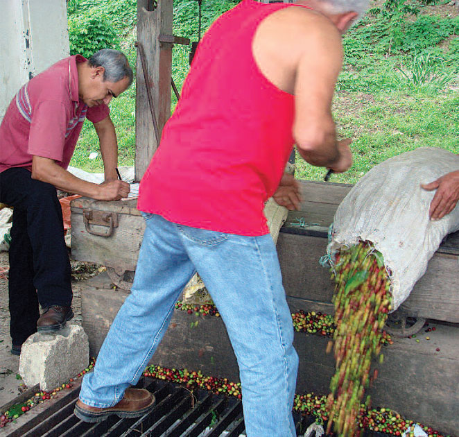 farmworkers working with seeds