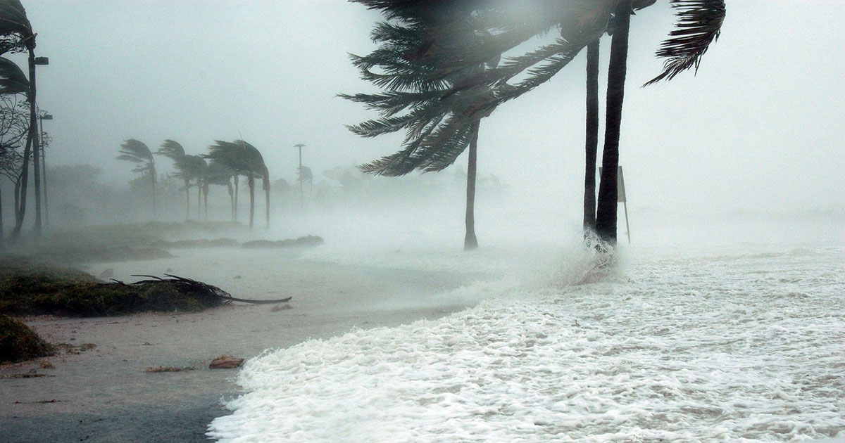 Hurricane thrashing palm trees on the beach