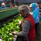 Prioritizing Farmworkers and Other Essential Food Workers for the COVID-19 Vacci