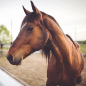 mcn Occupational Safety On the Horse Farm
