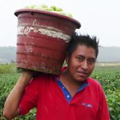 Pesticide Training at HCN