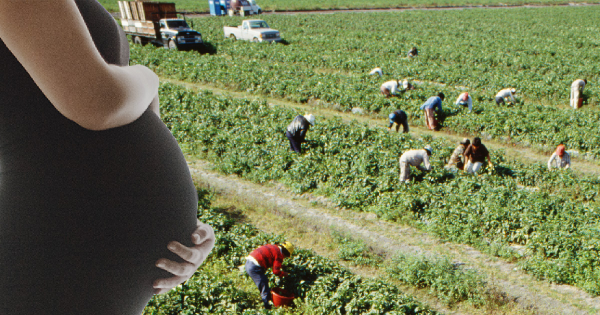 Pregnant woman stands in front of agricultural field