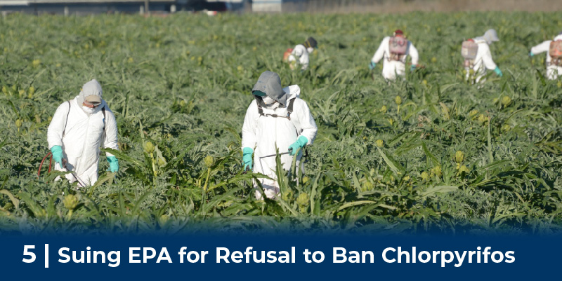 Workers Spray Pesticides on field