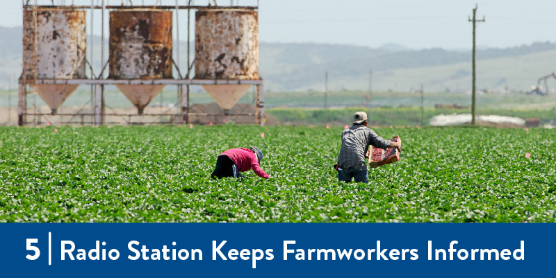 A photo of farmworkers working in the field