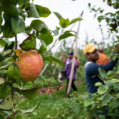 What's the Impact of COVID-19 on Food and Farmworkers? MCN's Amy Liebman Joins M