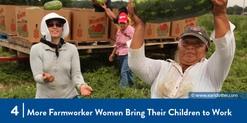 Farmworker women harvesting watermelons