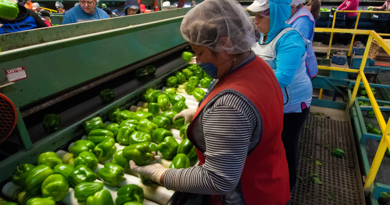 Foodworkers on the line at a packaging facility