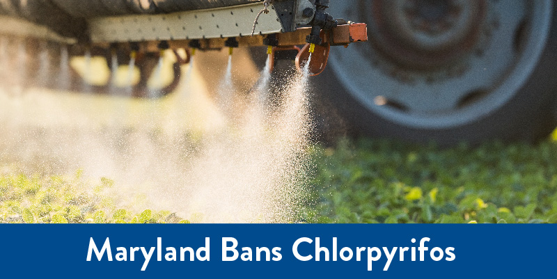 Pesticides being sprayed in field