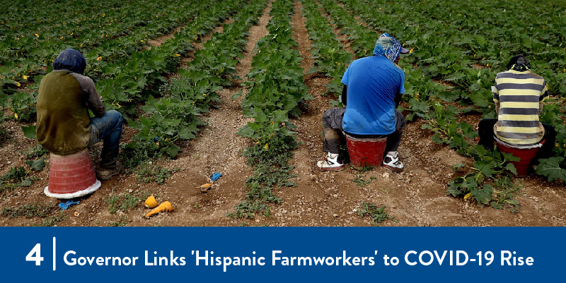 Farmworkers harvesting in the field