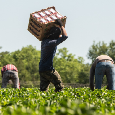 Two New Journal Articles Focus on Agricultural Workers, COVID-19, and Ways to Im
