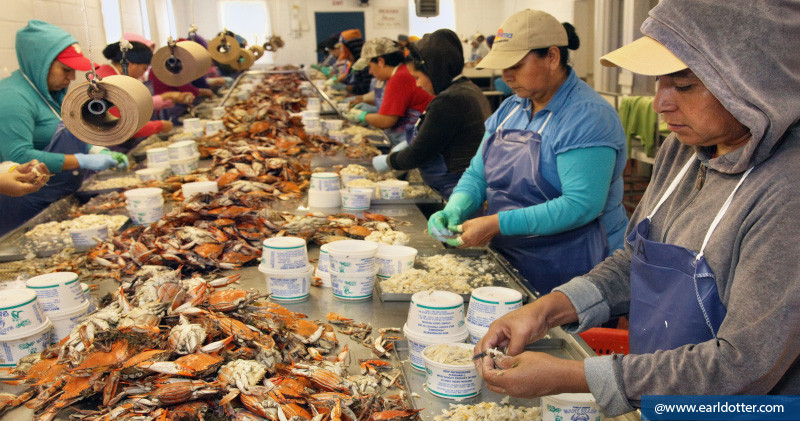 Crabpickers working on the line