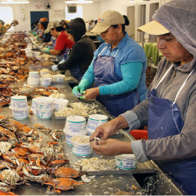 Crab Pickers Face Health Disparities in Maryland, Says New Report
